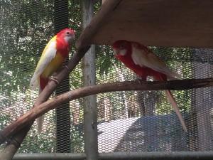 Bird_Park4