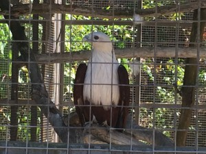 Bird_Park6